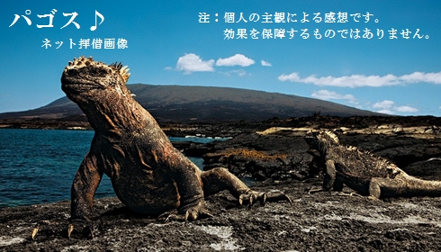 Galapagos_a17acc747f1bd36f1ce240200